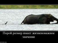 Фотография artem