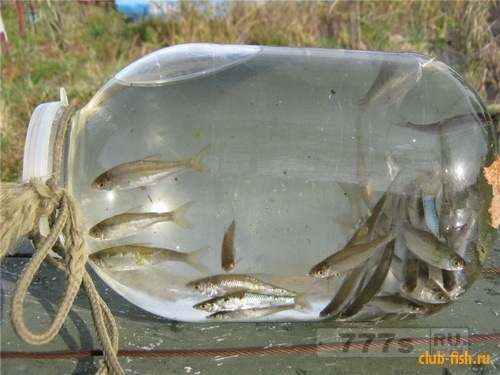 Фото рыба своими руками