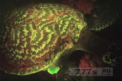 Обнаружена светящаяся черепаха