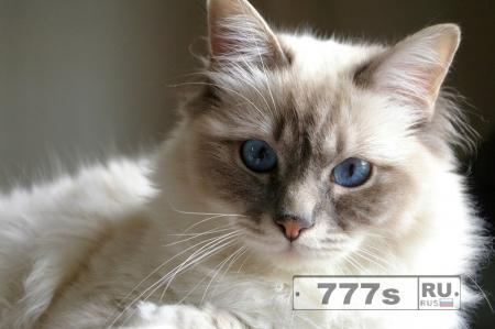 Мой кот Тимофей
