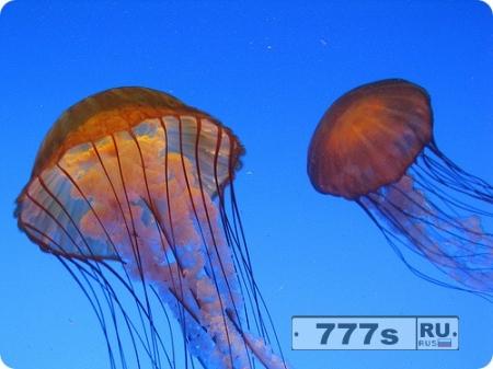 Немецкий турист стал жертвой ядовитой медузы в Таиланде