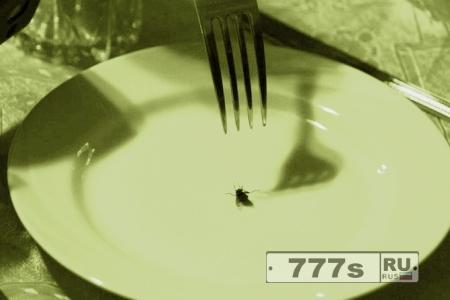 Вместо курицы и свинины – будем есть мух и сверчков?