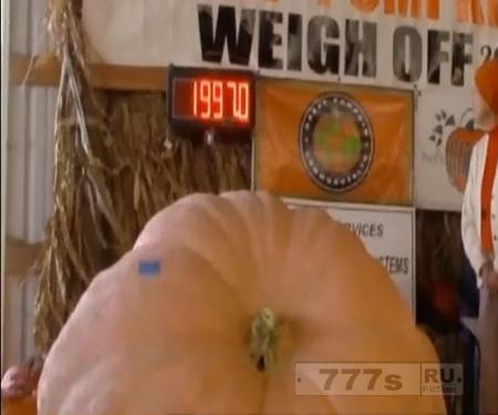 Тыква весом в 1000 килограммов