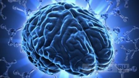 Наш мозг работает на 10%?