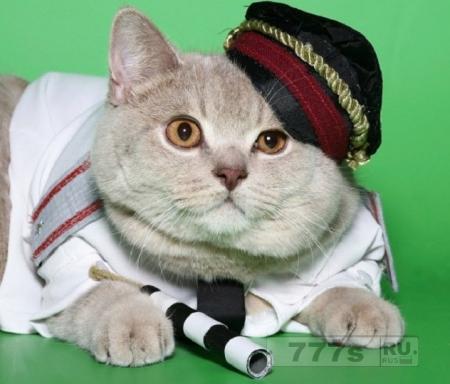 Умный кот на службе в ростовской полиции