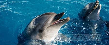 В Краснодарском крае экологи обнаружили тюрьму для дельфинов