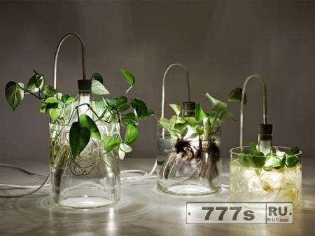LED-светильник Plant lamp, питающийся от бактерий