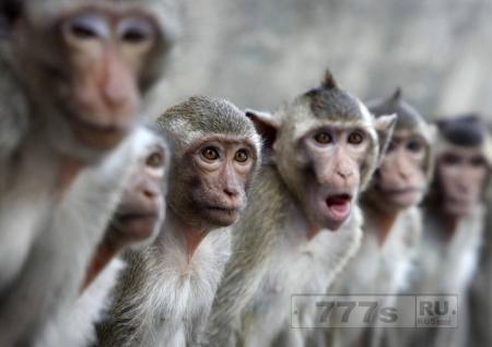 В Индии обезьяны борются за равноправие с людьми