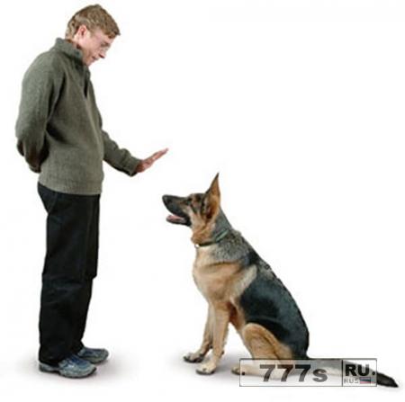 Живой уголок: как научить собаку сидеть