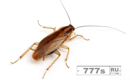 Занятная наука: ученые изучают тараканов