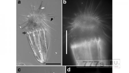 Существование бескислородных многоклеточных существ не подтверждается