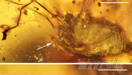 100 миллионов лет возбуждения