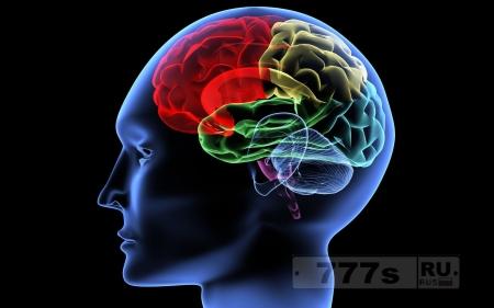 Лайфхаки: как выращивать больше новых нейронов во взрослом мозге