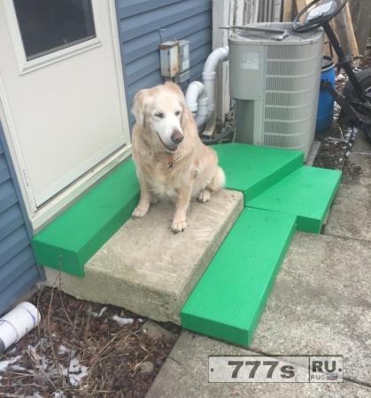 Заботливый хозяин построил ступеньки для собаки