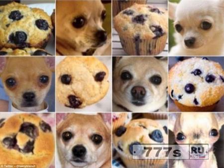 Чихуахуа или кекс? Безумие в социальных сетях
