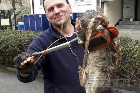 Огромные крысы Лондона