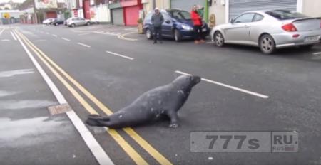 Тюлень каждый день ползет покушать рыбу