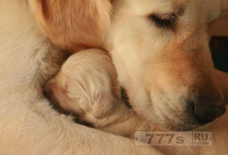 Собака в роли ассистента стоматолога