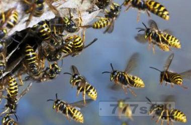 Так вот почему нас жалят осы и пчелы