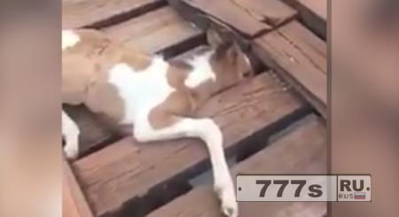 Человек спасает жеребенка застрявшего на мосту