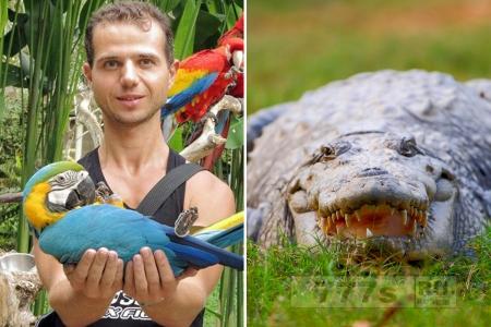Аквалангиста растерзал гигантский морской крокодил