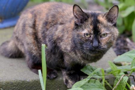 Кошку Тилли никто не хочет брать