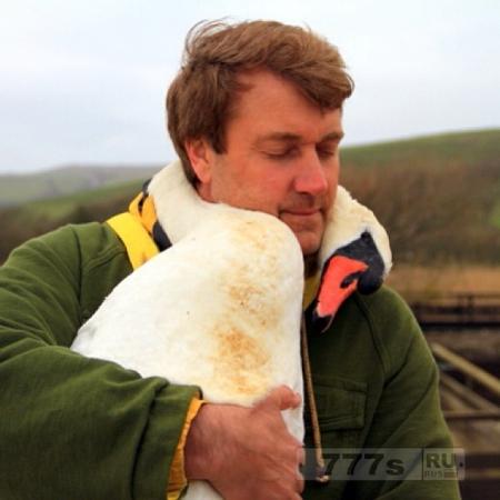 Лебедь обнимает человека.