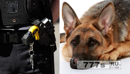 Полиция применила электрошокер против собаки.