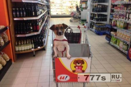 Супермаркет с тележкой для собак взорвал Интернет