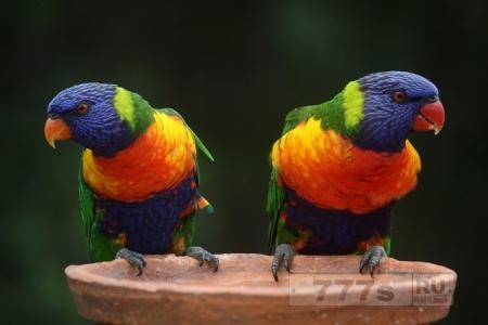Ссора с попугаем чуть не довела до тюрьмы