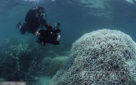 Ученые требуют защитить Большой Барьерный Риф от изменения климата