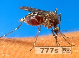 Новости: ВОЗ предупреждает Россию об опасности эпидемии вируса Зика
