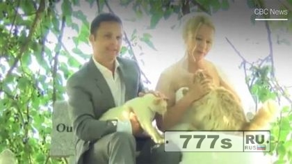 Пара из Монреаля пригласила 1000 кошек на свадьбу