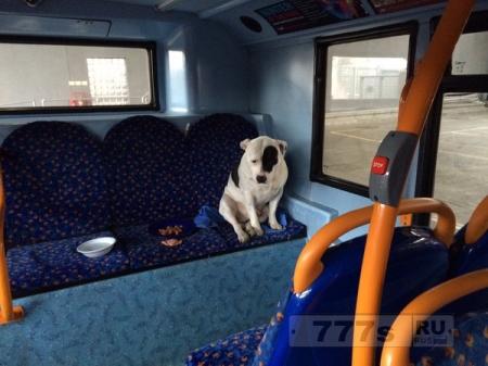 «Брошенная» в автобусе собака воссоединилась со своими владельцами