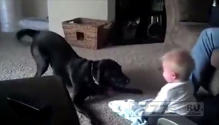 Прелестный ребенок истерично смеется над игривой собакой
