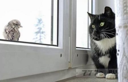 Кошка пытается поймать птицу, и врезается головой в окно