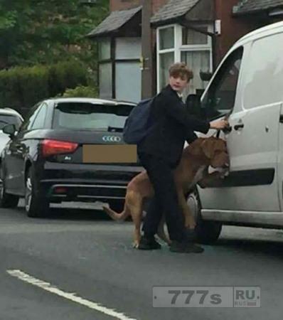 Герой школьник спас жизнь собаки после того, как она вырвалась из закрытой машины