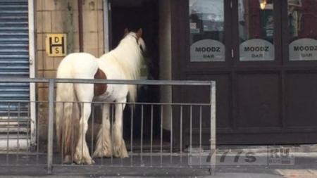 «Заходит лошадь в бар», так начинался анекдот; а она действительно зашла