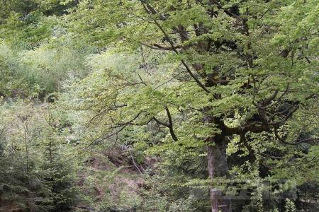 Как долго вы будете искать медведя в этом лесу на фото?