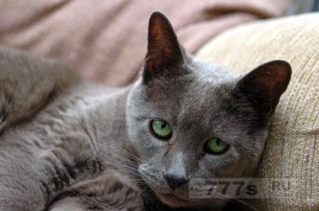 Знакомьтесь кот-сиделка, может предчувствовать начало приступа у его владельца