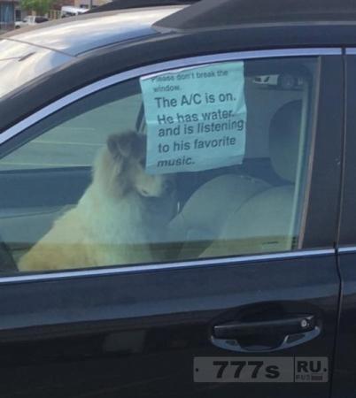 Собака осталась одна в машине, хозяин просит не разбивать окно, чтобы помочь ей