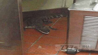 Мужчина, который бросил аллигатора в ресторан во Флориде, получил испытательный срок