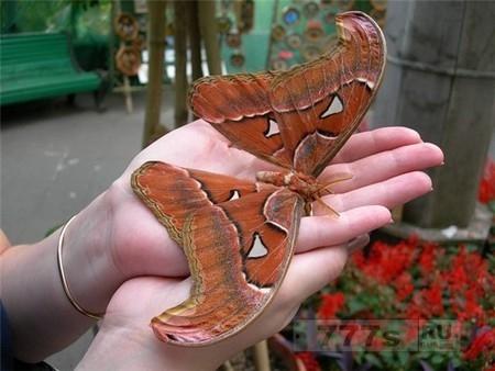 Интересно: самые необычные насекомые