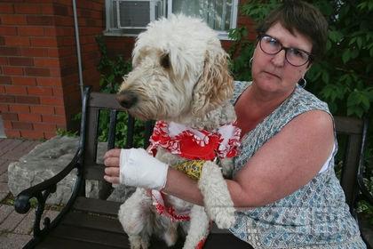Женщина недовольна ответом на нападение собаки