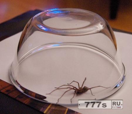 Женщина вызывает полицию после того, как поймала паука стеклянной миской