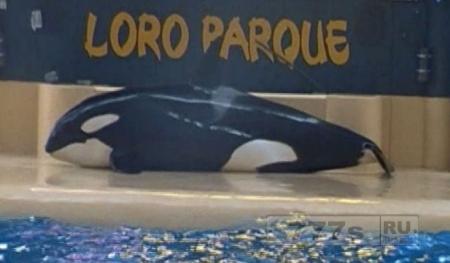 Туристы считают, что кит из SeaWorld выбросился на берег для самоубийства