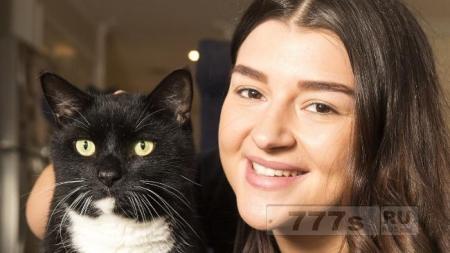 Домашняя кошка выжила после того как она попала в капкан для кролика