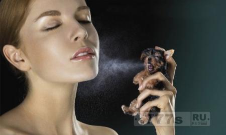 Живой уголок: как справиться с запахом псины в доме