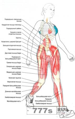 Здоровье: какие мышцы работают при ходьбе?