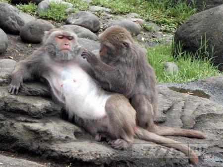 В китайскую деревню собрали обезьян для туристов, потом обезьяны ее захватили